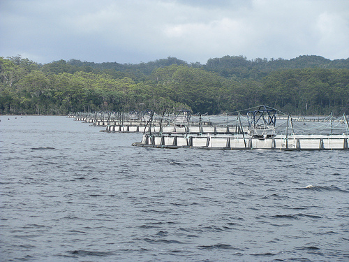 Tasmanian Jobs and Growth Plan to improve aquaculture industry