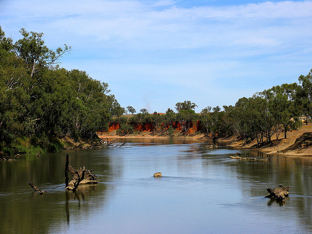New project to tackle carp threat to endangered native fish in New South Wales
