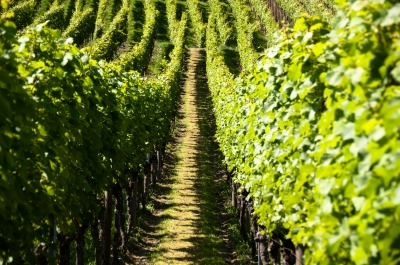SA Government provides $277,000 for Limestone Coast food and wine cluster projects
