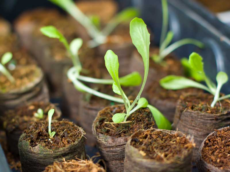 Tasmanian Government announces free horticulture courses for young Tasmanians