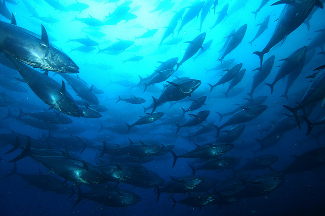 WA State Government declares development zone for large-scale fish farms