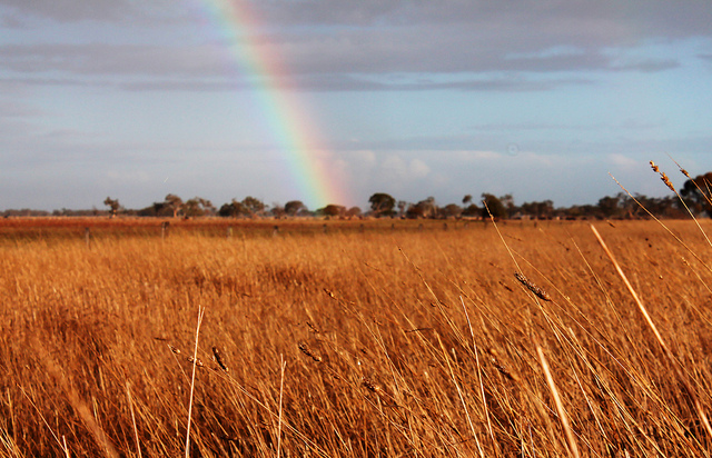 $20 million investment to boost WA grain industry