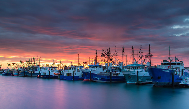 New management plan to ensure bright future for Spencer Gulf prawn fishery