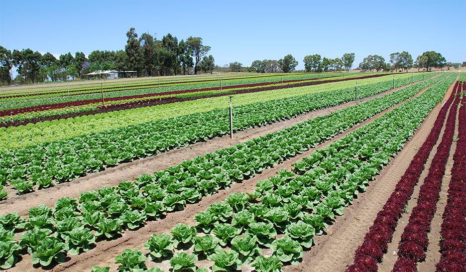 $17m in agricultural grants available in WA
